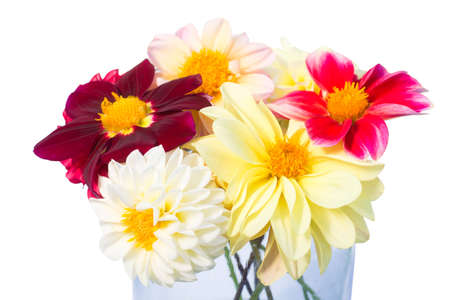 Bouquet of multi-colored dahlia flowers. Blooming summer season