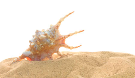 Scorpion spider conch shell (Lambis scorpius) in sand isolated on white background. Mollusk seashells. Sea vacation theme Stockfoto