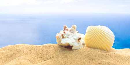 Two shells in sand on a background of sea. Mollusk seashells. Sea vacation theme