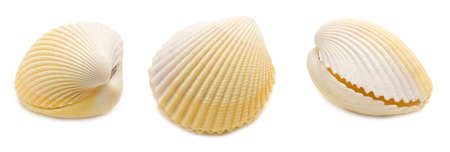 Set of three common cockle (Cerastoderma edule) conch shell angles isolated on white background. Mollusk seashells Stockfoto