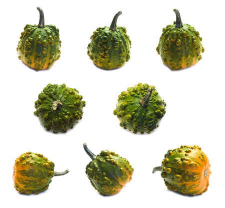 Set of eight orange-green warty pumpkins angles isolated on white. Decorative plants, autumn harvest