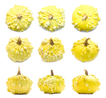 Set of nine yellow warty pumpkins angles isolated on white. Decorative plants, autumn harvest Stockfoto