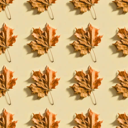 Seamless background with dry maple leaf on beige paper. Autumn foliage pattern