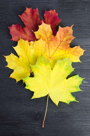 Autumn maple leaf palette on a black wooden surface Stockfoto