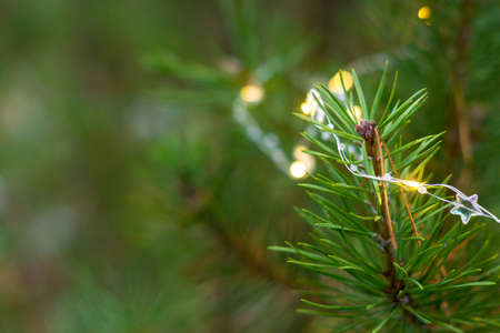Garland on pine branches in the forest. New year mood, christmas winter day Stockfoto