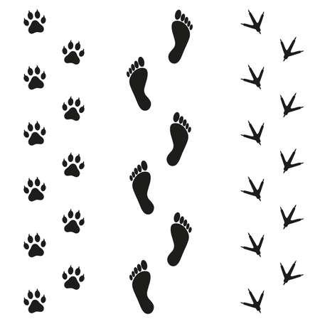 鳥や白い背景の上に犬の痕跡