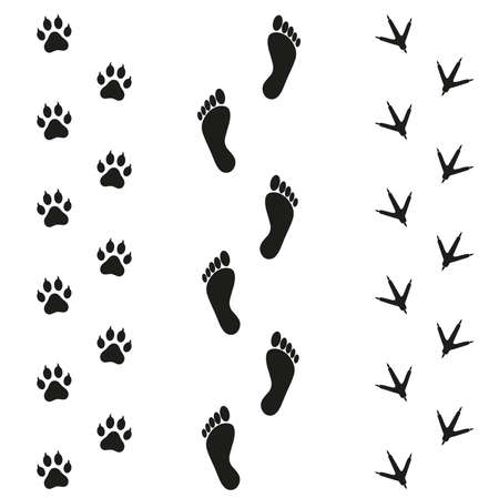 Traces of human bird and dog on white background