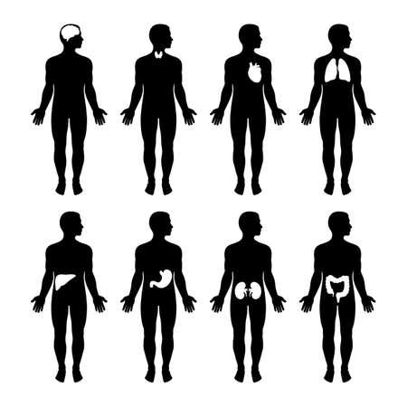 A set of male silhouettes. Human anatomy. Standard-Bild - 123276133