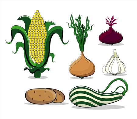 vegetables colored summer on white background