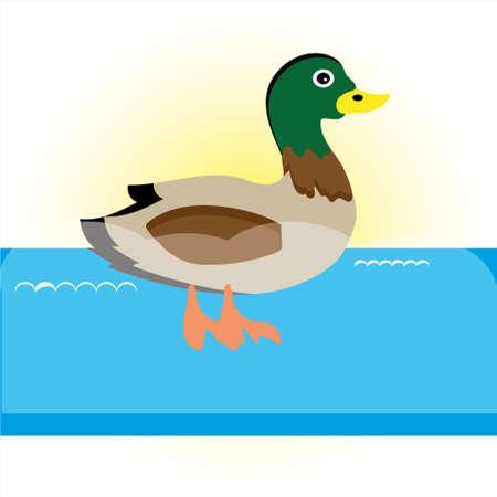 Swimming  duck illustration.
