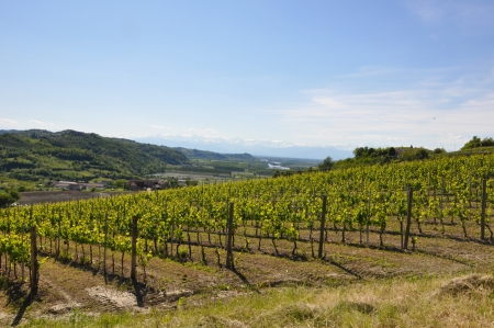 collina: Vigneto Monferrato Stock Photo