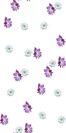 Garden daisy seamless pattern on white background. Botanical illustration hand drawn. Vector floral design for fashion prints, scrapbook, wrapping paper Vectores