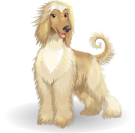 Purebred dog afghan hound vector illustration cheerful smiling greyhound borzoi dog