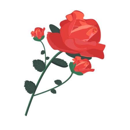 Three beautiful tea roses for any design