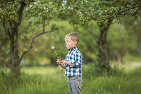six-year-old boy in a birch forest in full growth in the spring. a child licks a large Lollipop. Foto de archivo