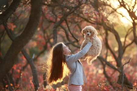 Girl in the autumn forest holding a dog breed dwarf poodle.