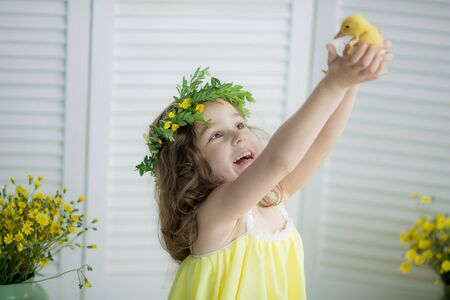 Cute beautiful girl with a wreath on her head in a yellow outfit holds a yellow, small duckling against a white wall. Stok Fotoğraf