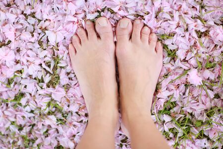 Human legs close up on pink flower petals background.
