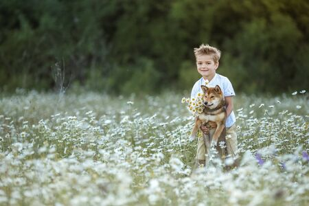A child plays with a dog in a field with daisies.