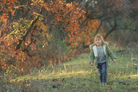 A cheerful child walks in the autumn in a garden with trees covered with a yellow leaf.