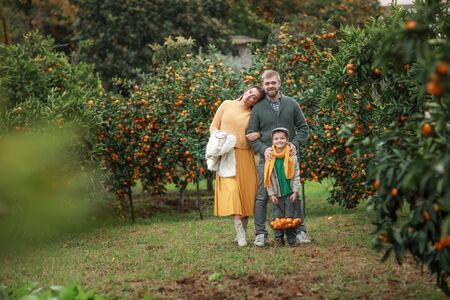 Mom dad and son are standing in their own garden of tangerine trees. Stock Photo
