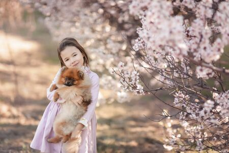 Girl with dog pikines. A dog in the arms of a little girl in a pink dress on a walk in the meadow Фото со стока