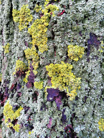 Gray tree bark with colorful mossy textured Stok Fotoğraf