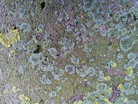 Gray stone with colorful mossy textured Stok Fotoğraf