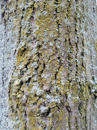 Gray tree bark textured background images. Mossy tree bark