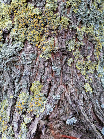Brown tree bark with colorful mossy textured background images.