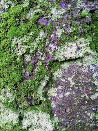 Close up of gray old wood with mossy textured pattern Stok Fotoğraf