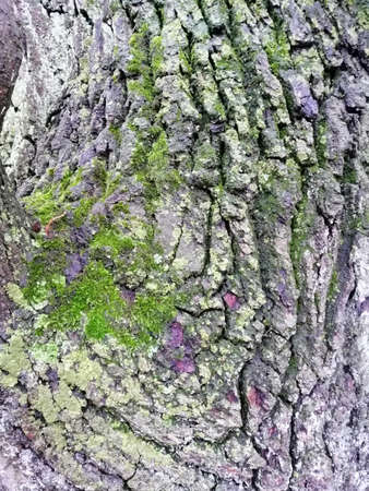 Close up of varicolored old wood with mossy textured pattern