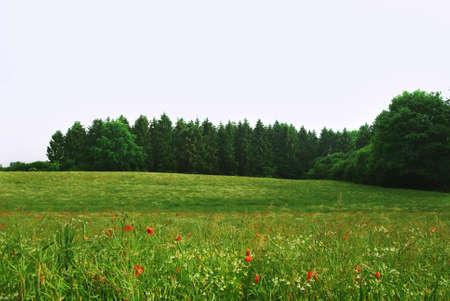 Beautiful landscape with poppy field. Summer poppy flowers Stok Fotoğraf