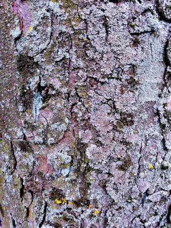 Tree bark with colorful mossy textured background images