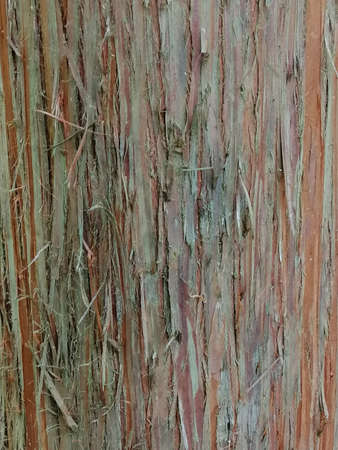 Close up of colorful old red wood with mossy textured pattern