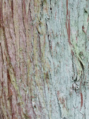 Close up of colorful old wood with mossy textured pattern