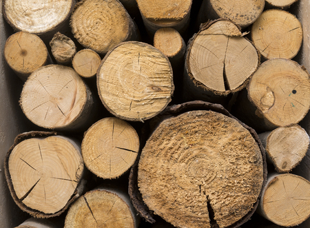 sawed down tree trunks, many logs, several logs, wood, wood texture,