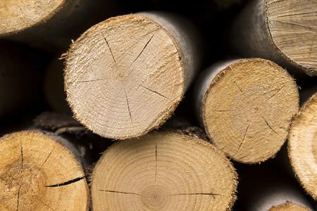 dried logs, trees, texture wood ,wood,  few logs
