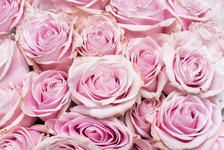 bouquet of pink roses, petals, many purple flowers Reklamní fotografie