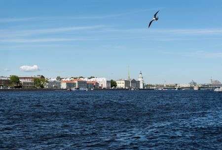 bird in the sky over the river,, view of the Neva river in St. Petersburg,   old buildings on the river embankment on a Sunny day, Seagull