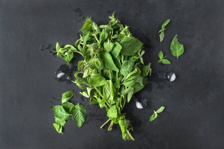 bunch of fresh mint branches on a black background, pieces of ice, greens