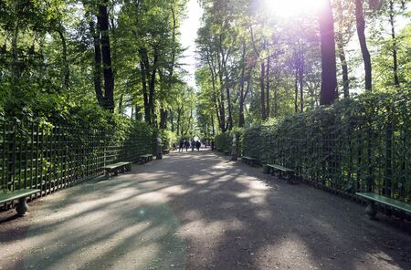 path in the summer garden in St. Petersburg on a Sunny day, green hedges, trees, sunlight breaks through the leaves of trees