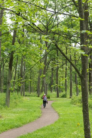 man walking on the path in the forest among the tall green trees ,man and nature