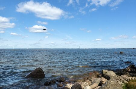 bird in the sky with clouds over the Gulf of Finland on a Sunny day, the stones on the coast of St. Petersburg Stok Fotoğraf