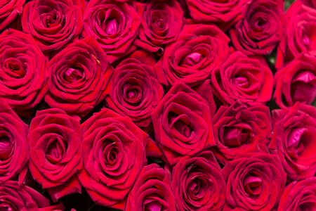 bouquet of red roses, a lot of fresh roses, a bouquet of flowers, red petals Banco de Imagens