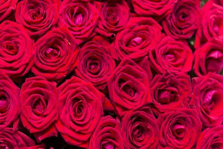 ramo de rosas rojas, muchas rosas frescas, un ramo de flores, pétalos rojos Foto de archivo