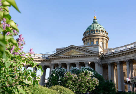 view of the Kazan Cathedral in St. Petersburg, lilac bush in summer 免版税图像