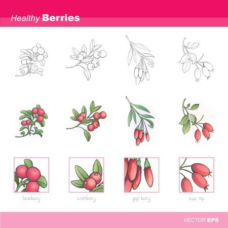 Healthy berries Vector