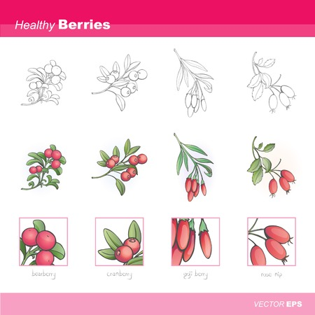 therapeutic: Healthy berries