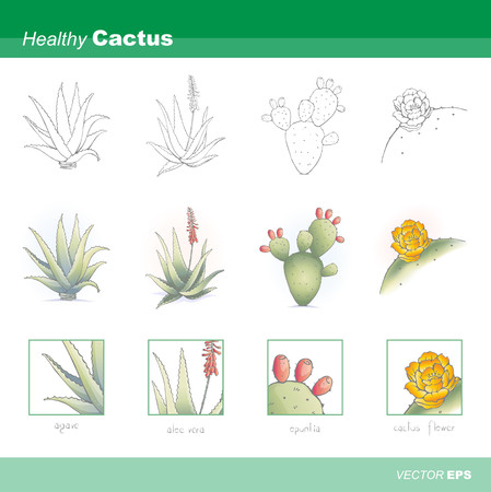 pears: Healthy cactus